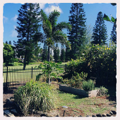 Pukalani Fairway Homes - homes for sale by the Pukalani Golf Course