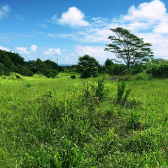 build your dream home when you find the perfect land in Haiku Maui Hawaii 96708